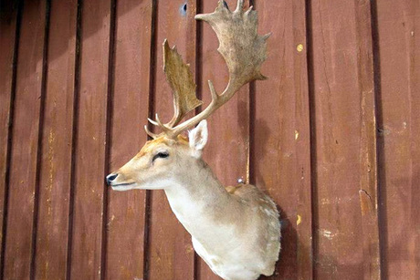Hawkins Taxidermy LLC