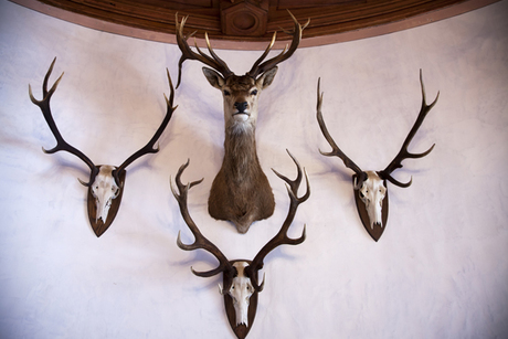 Halstead Taxidermy