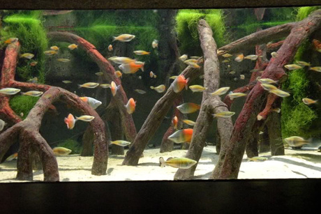 Finatics Tropical Fish