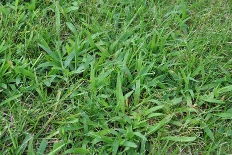 Scotts Halts Crabgrass Preventer (5,000 sqft Coverage)