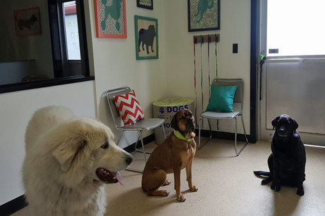 Unleashed Grooming & Doggie Daycare