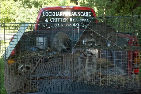 Lockharts Lawncare and Critter Removal