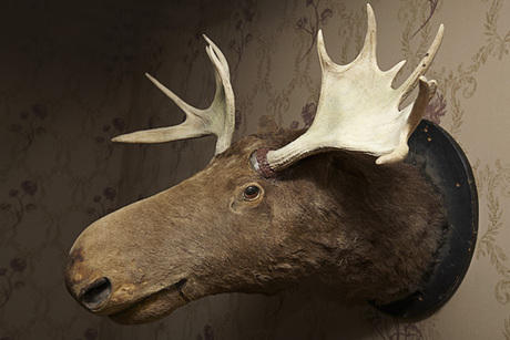 Gone Wild Taxidermy